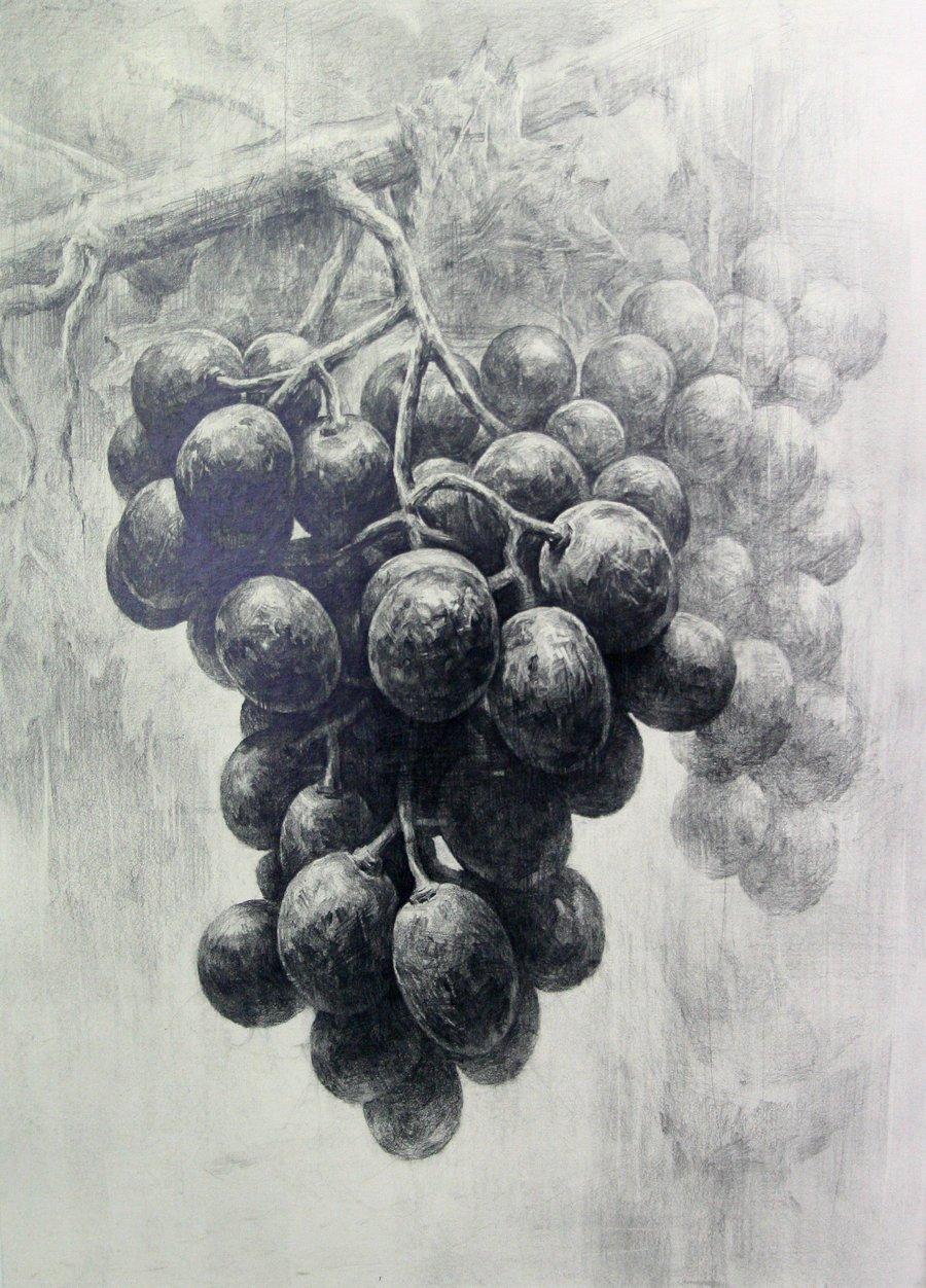 Drawn grapes pencil sketch Com DrawingsPencil grapes Charcoal deviantart