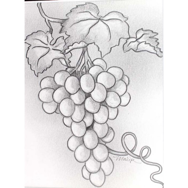 Drawn grapes pencil sketch Value Zoom Grape Sketch Value