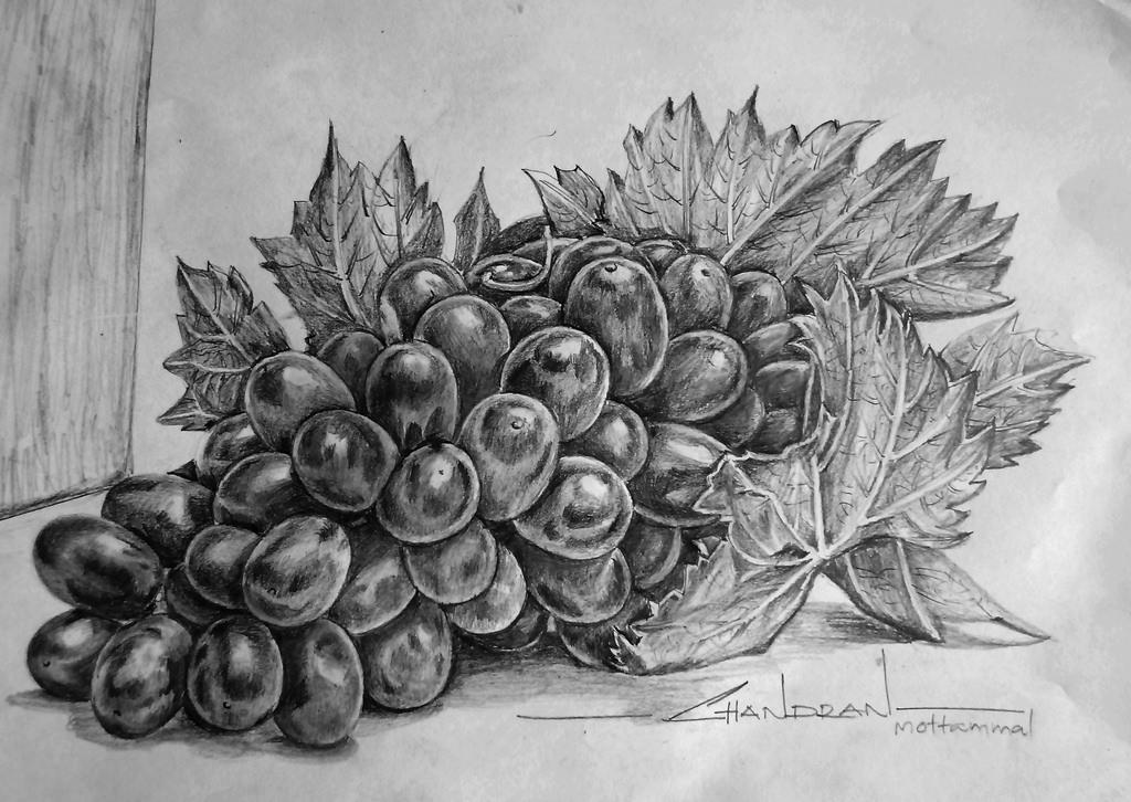 Drawn grapes pencil sketch By mottammal Flickr SKETCH
