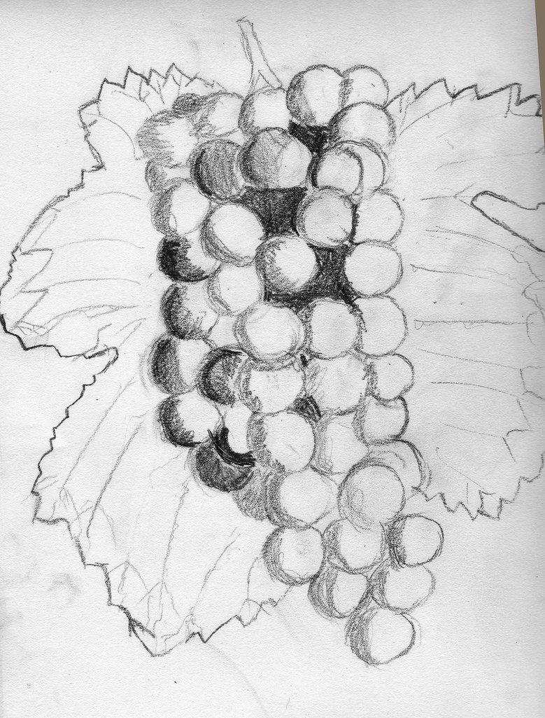 Drawn grapes pencil sketch Grapes DeviantArt RevelWood Grapes RevelWood