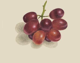 Drawn grapes realistic Drawing Etsy Drawing Grapes print