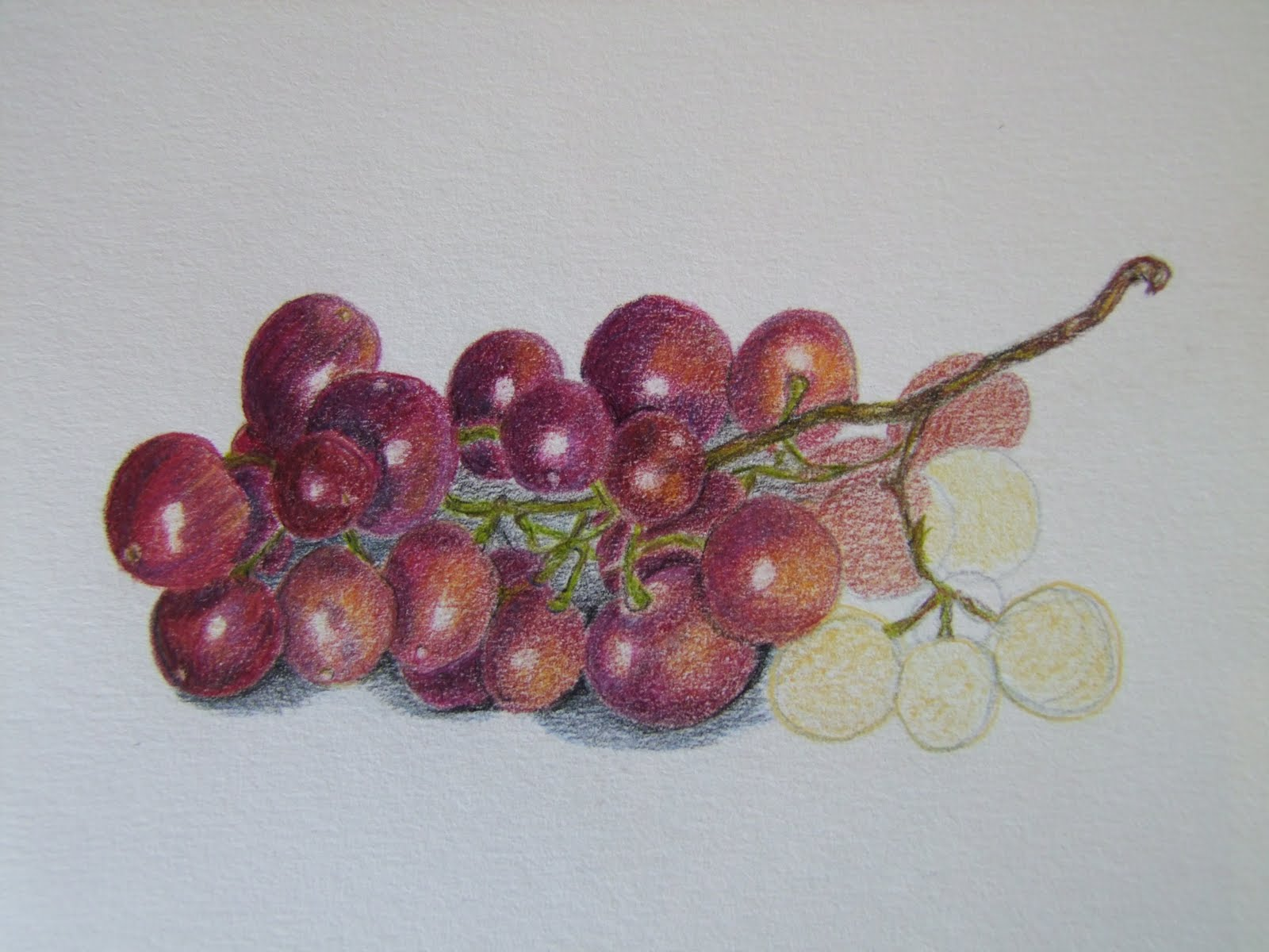 Drawn grapes realistic Few of work on second
