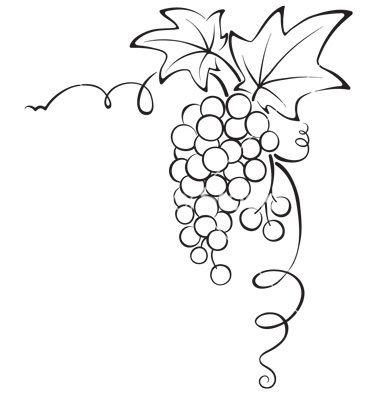 Drawn grape wine grape Grapevine VectorStock 34 graphic design