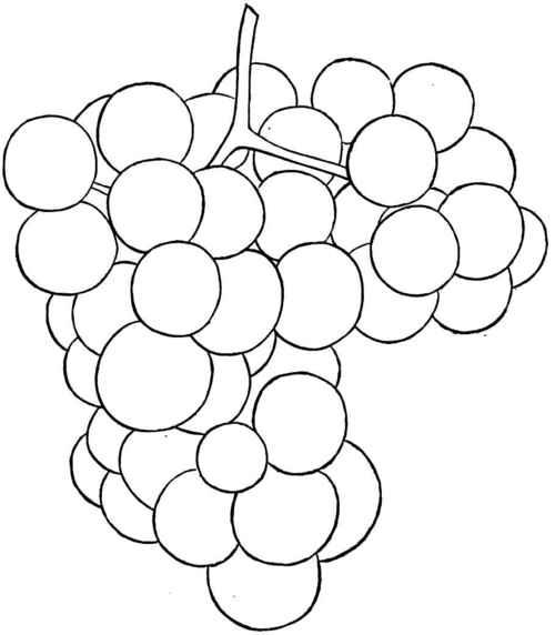 Drawn grape #7