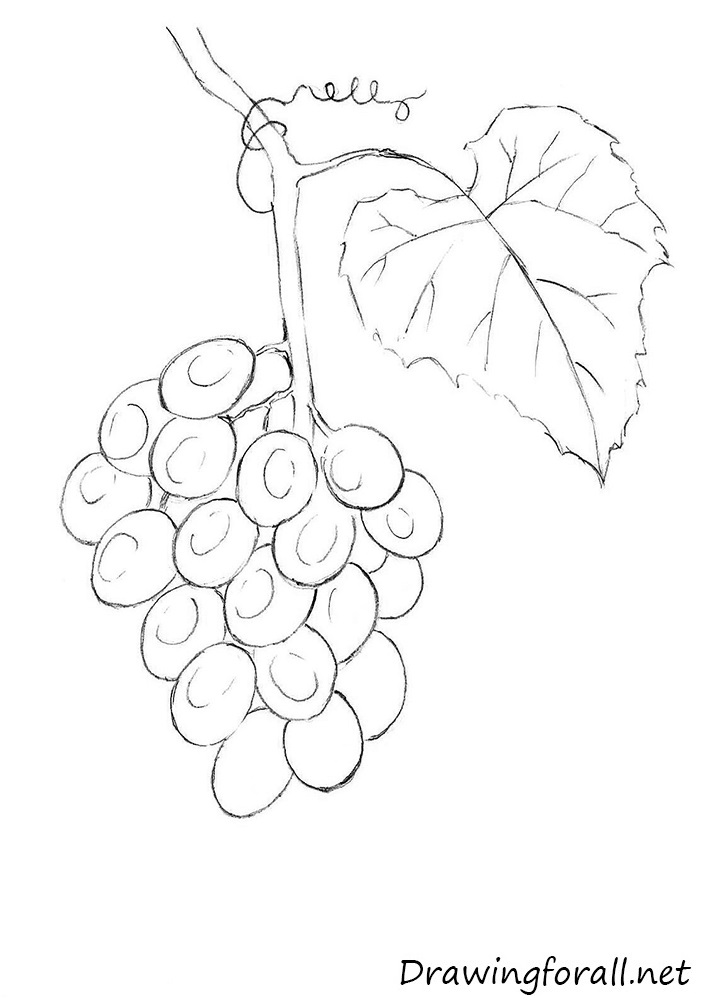 Drawn grape Grapes draw How DrawingForAll net