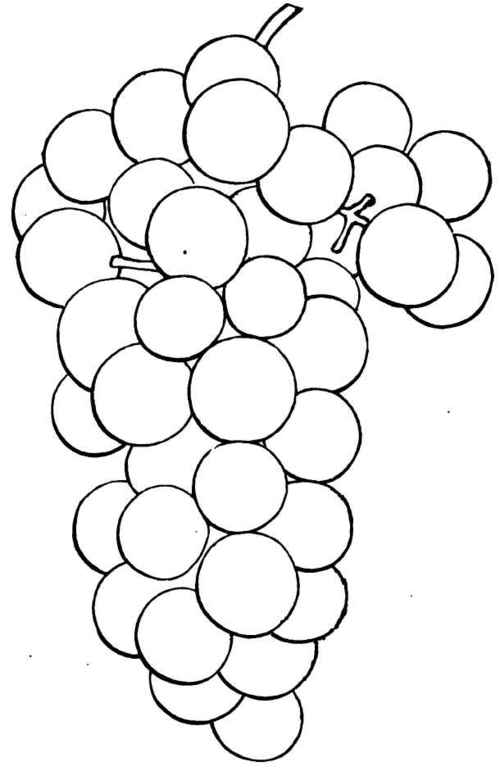 Drawn grape #10