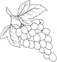 Drawn grapes Template of bunch Bunch graoes