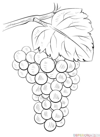 Drawn grape #4