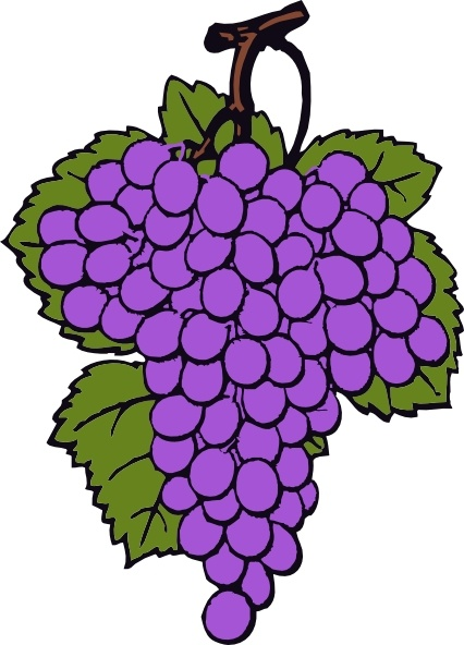 Drawn grapes cluster  in office Free svg
