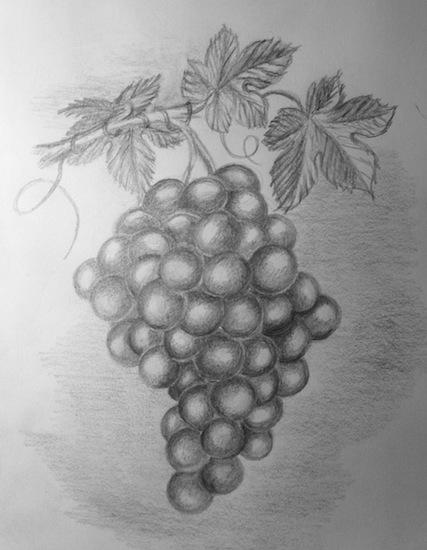 Drawn grapes pencil sketch Grapes Drawing  Pencil Grapes