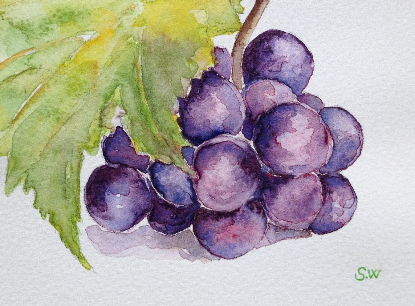 Drawn grapes realistic Grapes Watercolor life Still painting