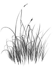 Drawn grass FINE DRAWING SIBLEY techniques)at ART