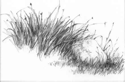Drawn pen grass Joshua How Water and Rocks