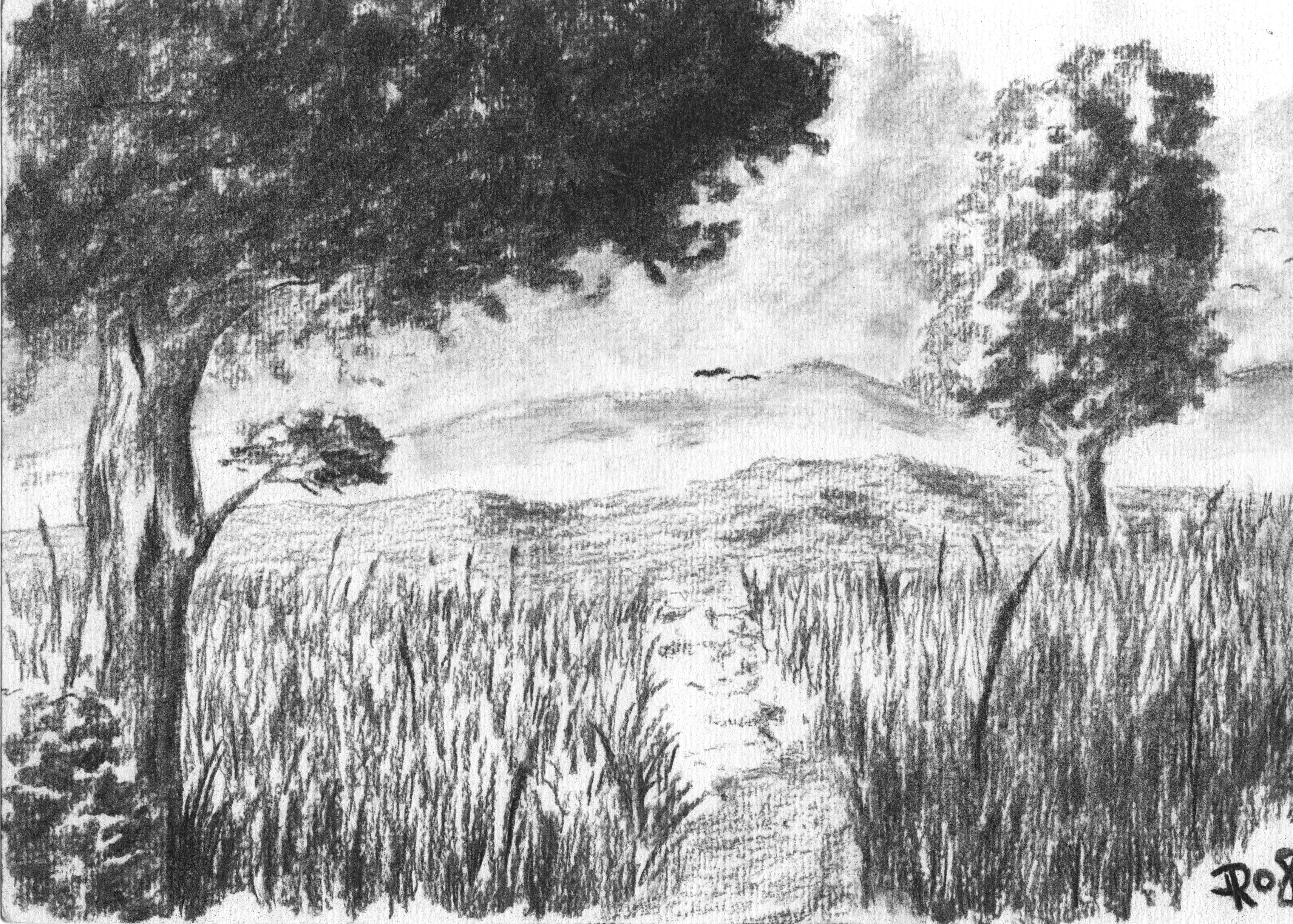 Drawn grass charcoal Do landscape charcoal zeichnen best