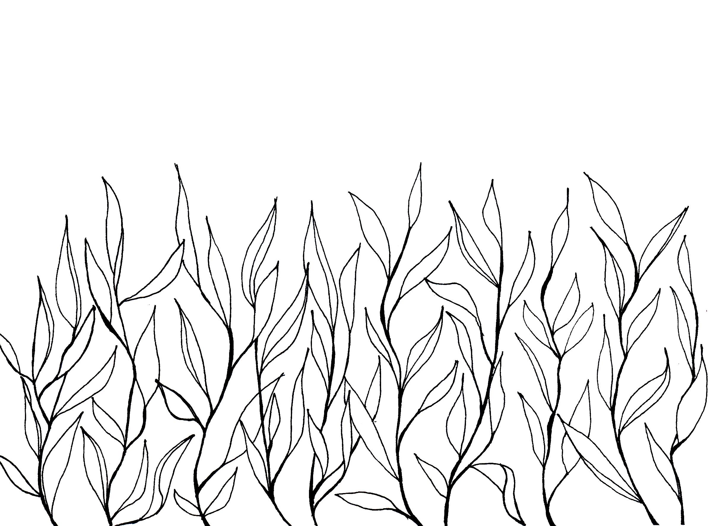 Drawn grass simple #flower #flower  #wild hand