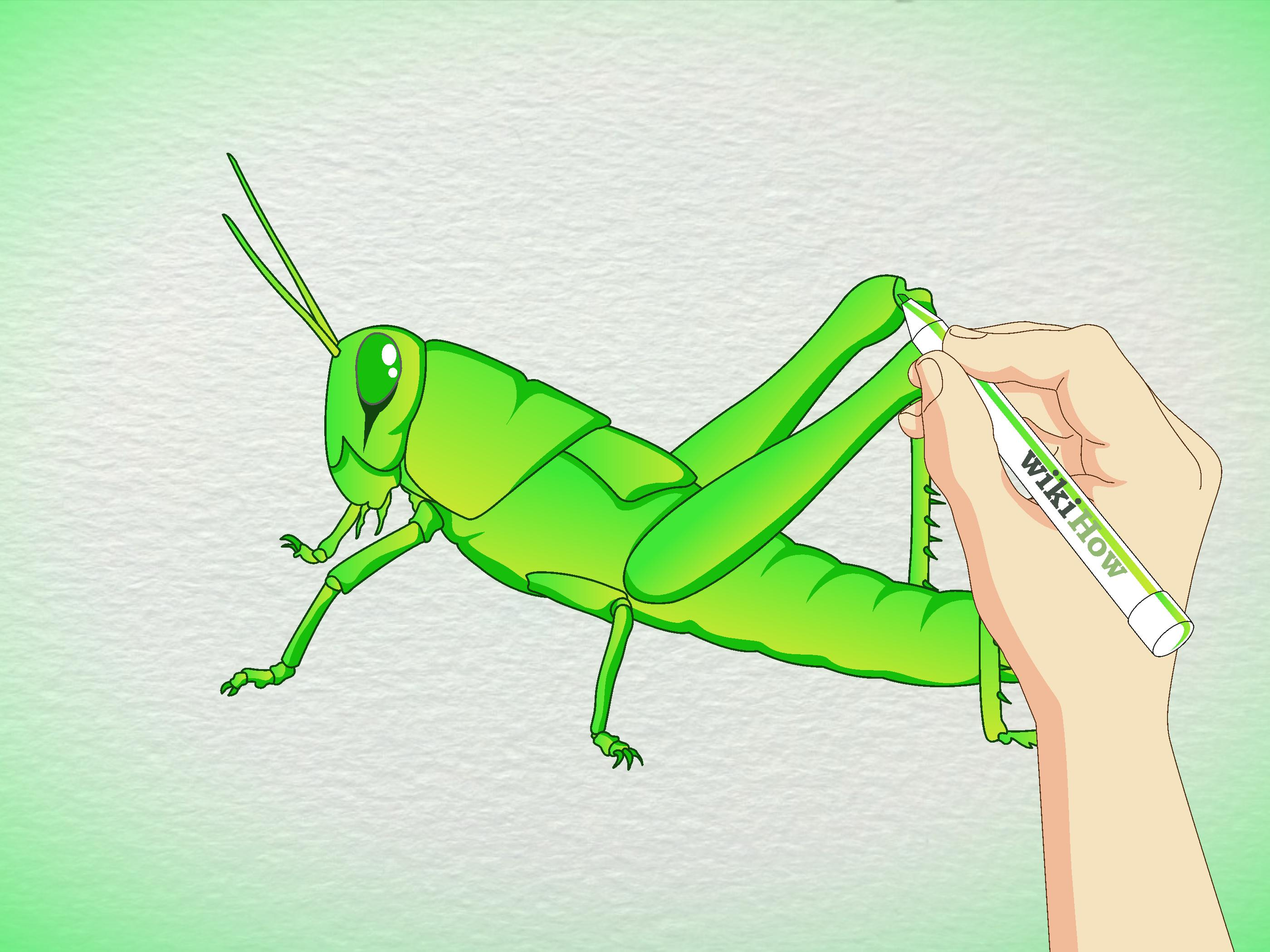 Drawn grasshopper (with 5 a  wikiHow