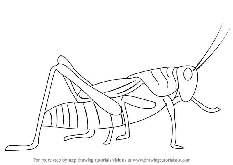 Drawn grasshopper Draw Step How Grasshopper Step