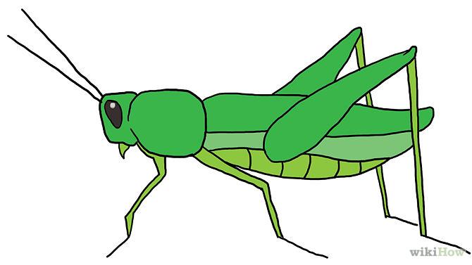 Drawn grasshopper Coloring Grasshopper Intro Final Drawing
