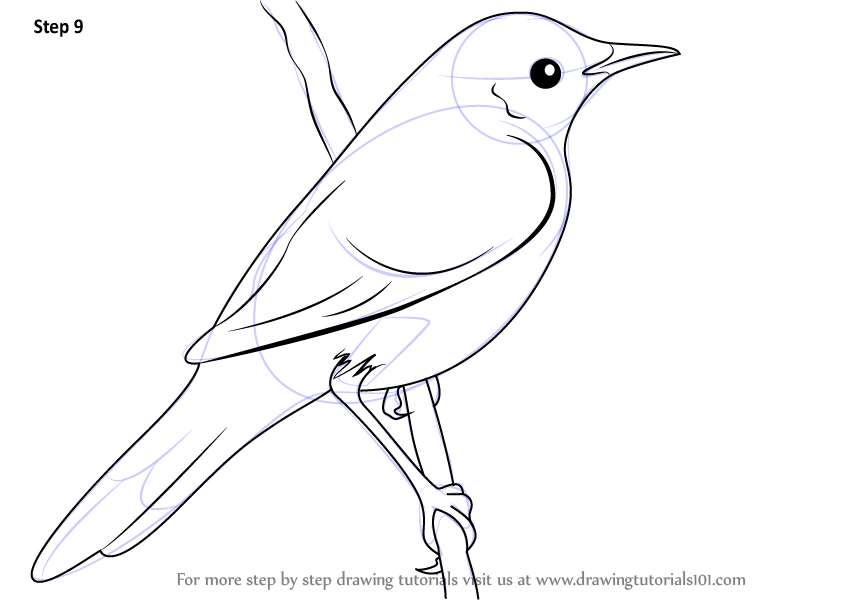 Drawn grasshopper Drawn Bird Draw elements How by the