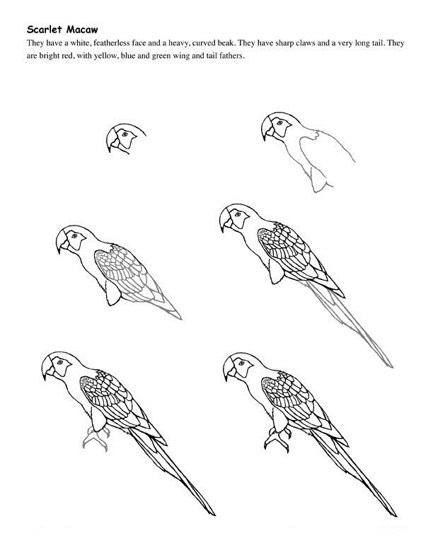 Drawn grasshopper Drawn Bird I'm  Birds Drawing To