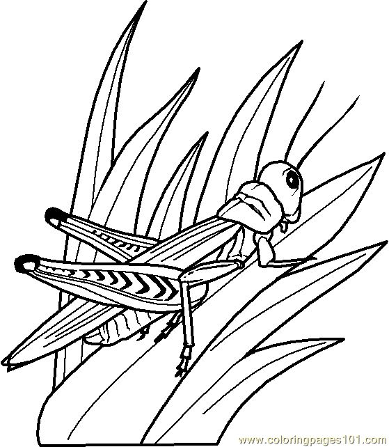 Drawn grasshopper Drawn Bird About Free Best 0002 coloring