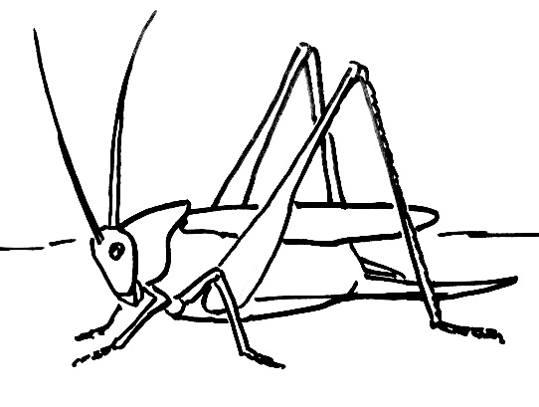 Drawn grasshopper Drawn Bird To a picture Grasshopper Grasshopper