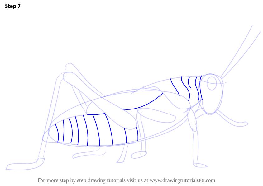 Drawn grasshopper Drawn Bird Grasshopper as Draw marks the