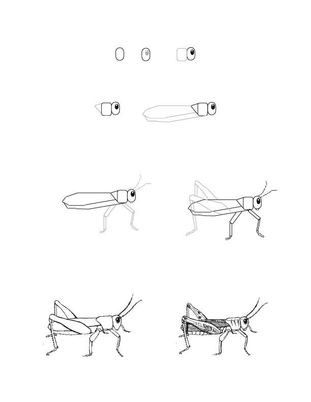Drawn grasshopper Drawn Bird Drawing Grasshopper Lesson Drawing A