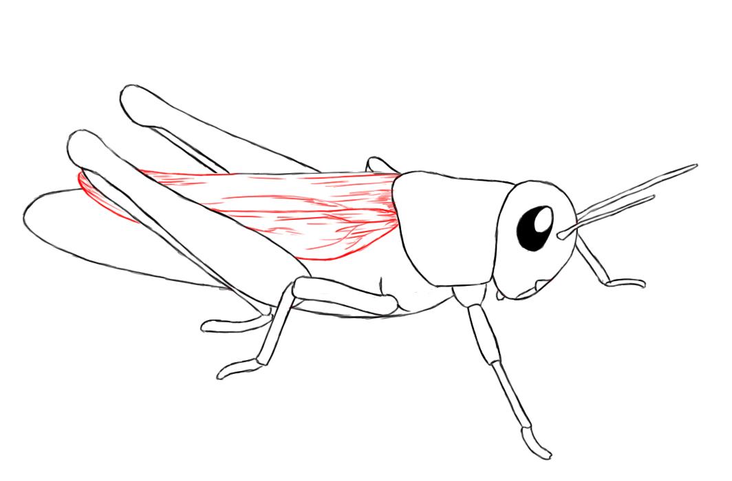 Drawn grasshopper Drawn Bird Bumps the a head by