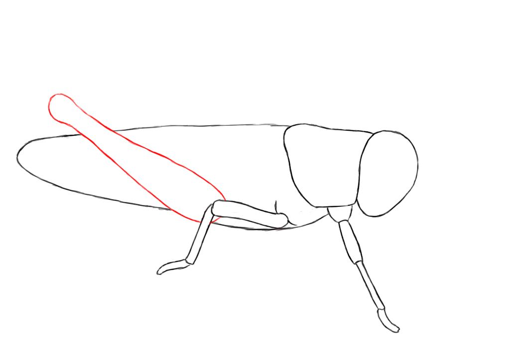 Drawn grasshopper Drawn Bird Draw A How To A