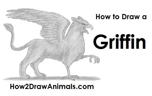 Drawn griffon Griffin to Griffin Draw Draw