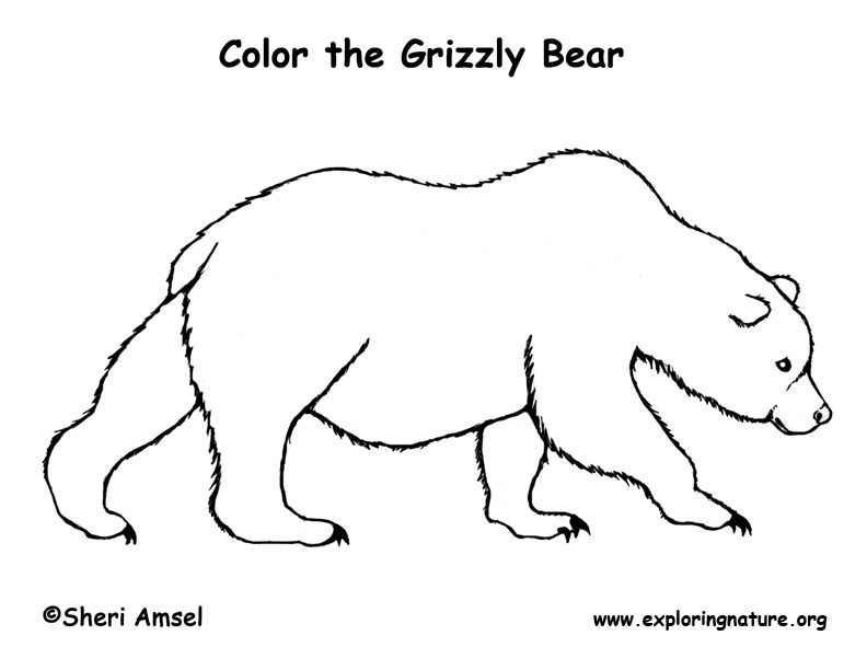 Drawn grizzly bear Gallery Art on Art Cute