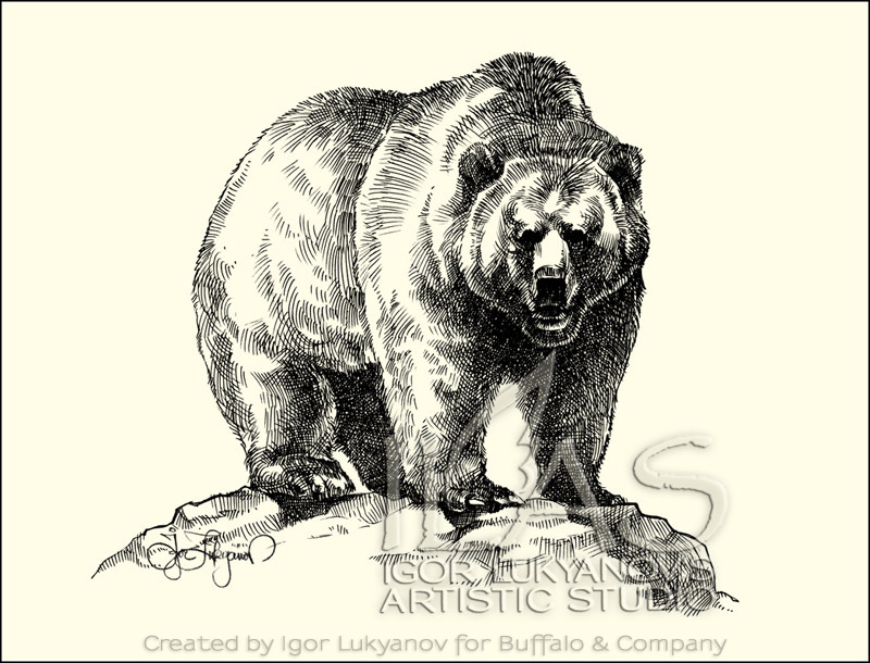 Drawn grizzly bear More Drawing rock on Find