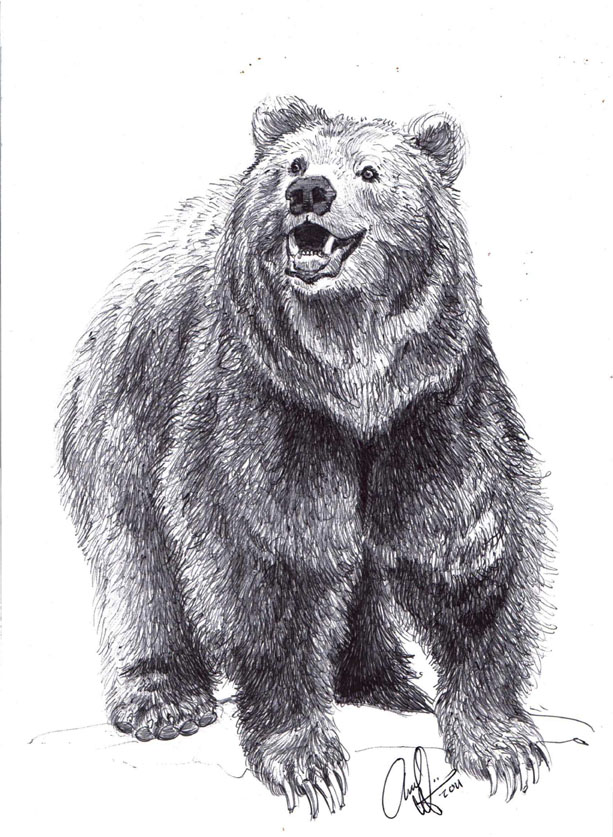 Drawn grizzly bear Grizzly Grizzly draw a Drawing