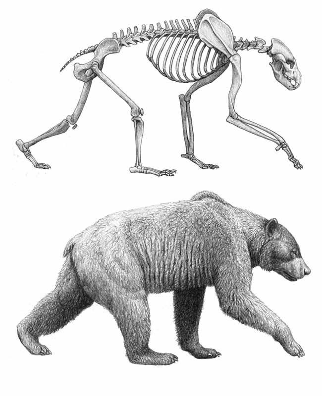 Drawn polar  bear anatomy Cerca pictures projecte Cerca con
