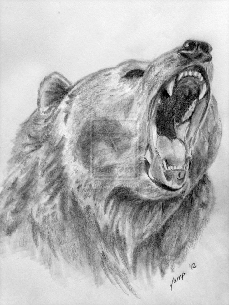 Drawn grizzly bear awesome Images and and Pin more