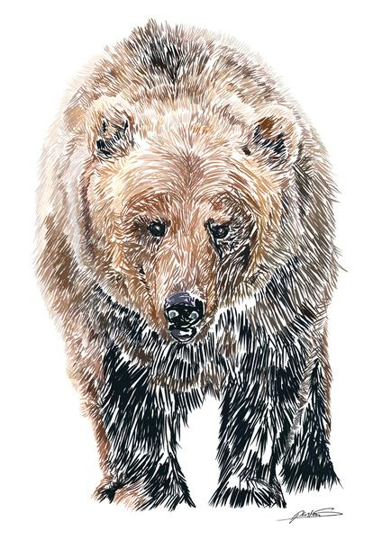 Drawn grizzly bear awesome 62 Pinterest Print best images