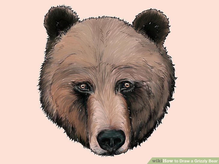 Drawn grizzly bear awesome A to Draw Grizzly 24