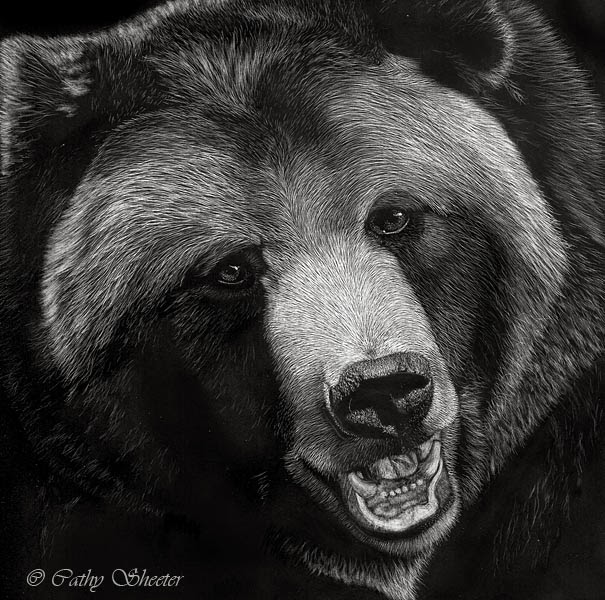 Drawn grizzly bear bear head Realistic Drawings Black and Drawing