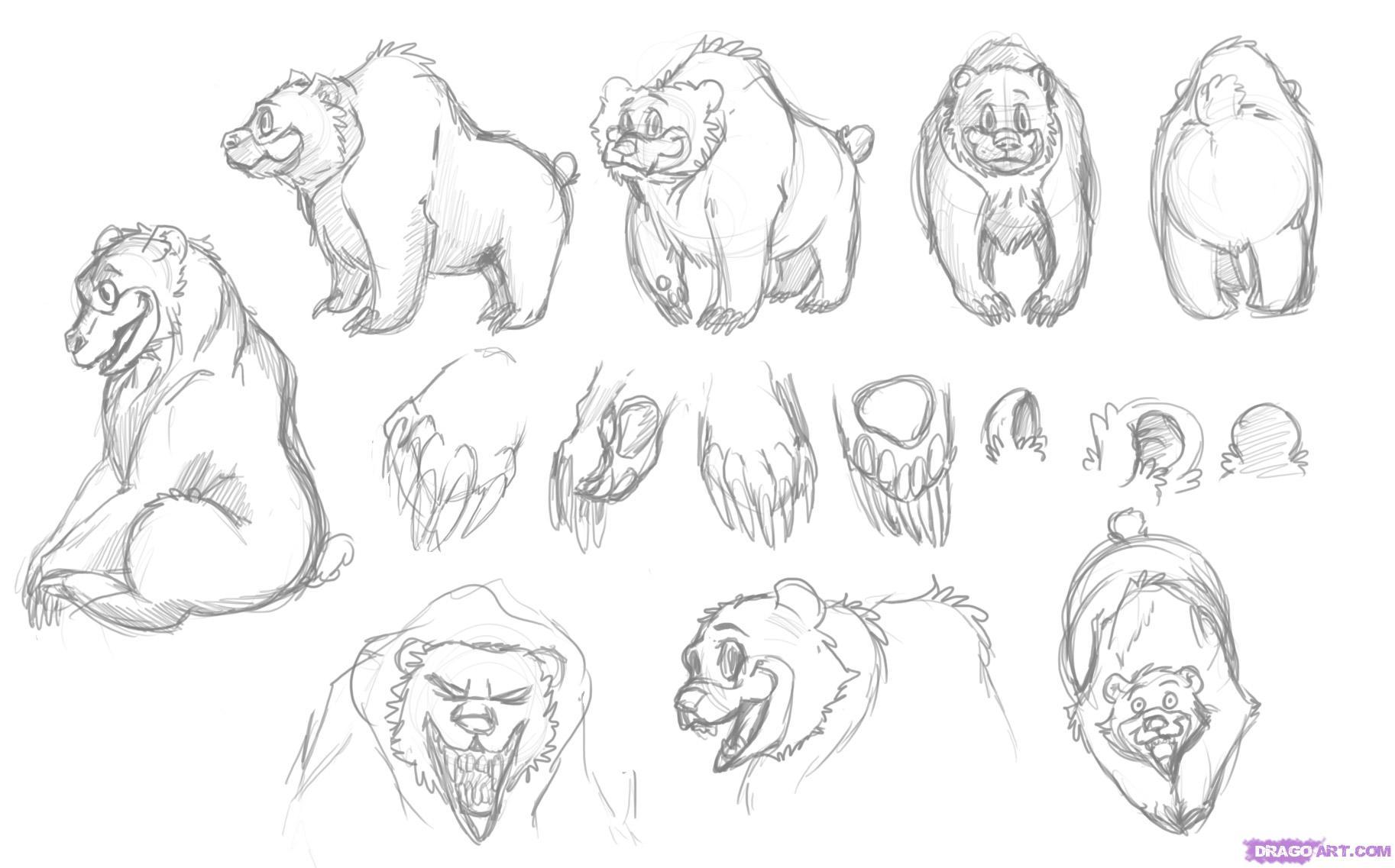 Drawn polar  bear dragoart A A Grizzly Bear Cartoon