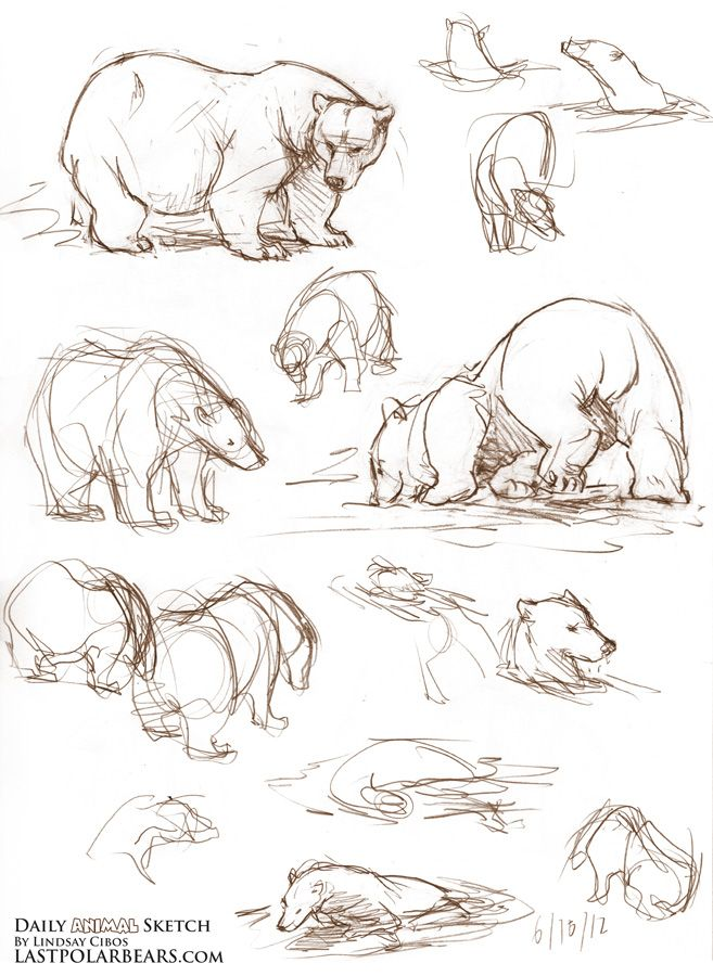 Drawn grizzly bear chibi 605 best on on Pinterest
