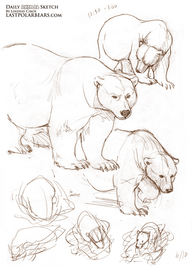 Drawn grizzly bear chibi Bears Lindsay August and 2012