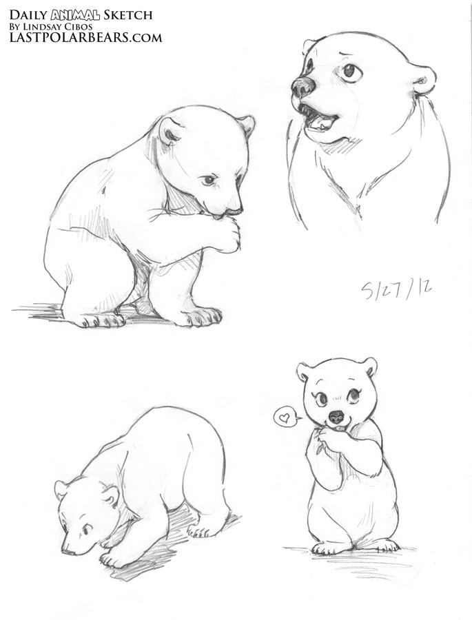 Drawn polar  bear baby animal Bears bears this  Find