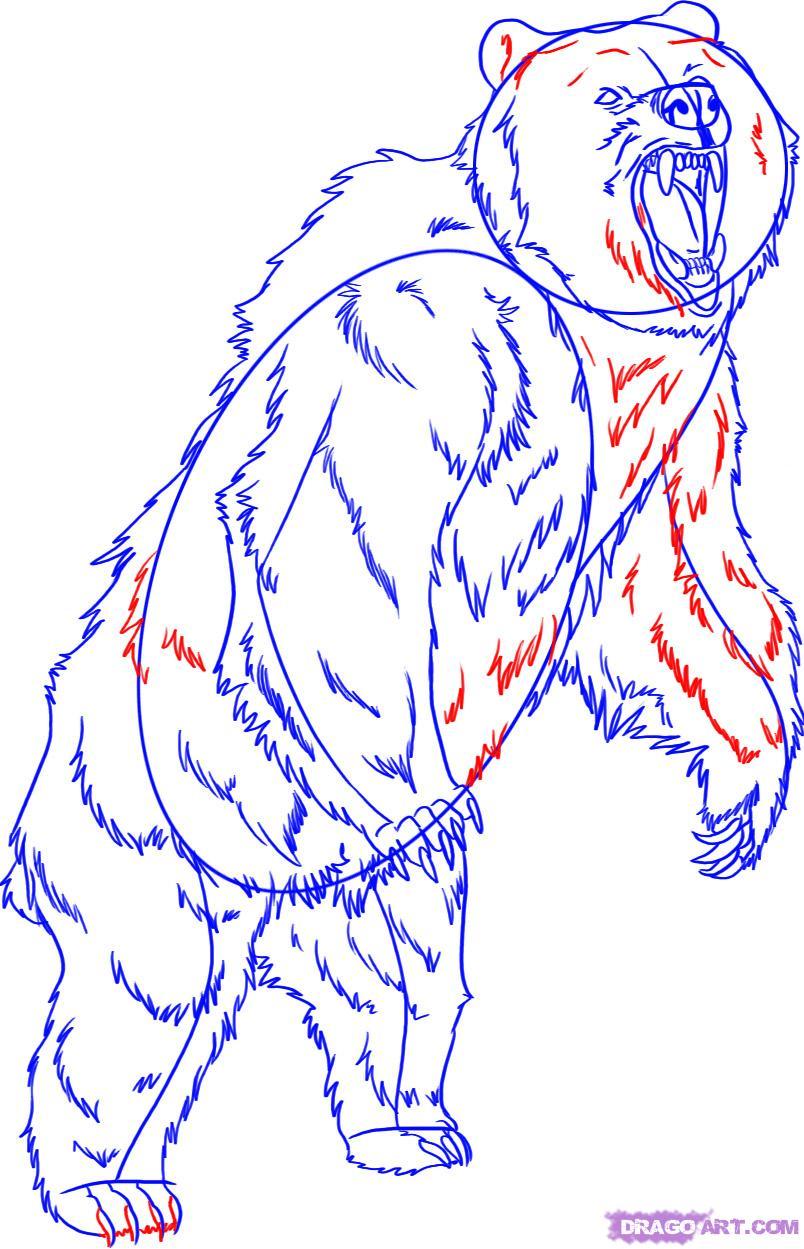 Drawn polar  bear dragoart A a Bear Step animals