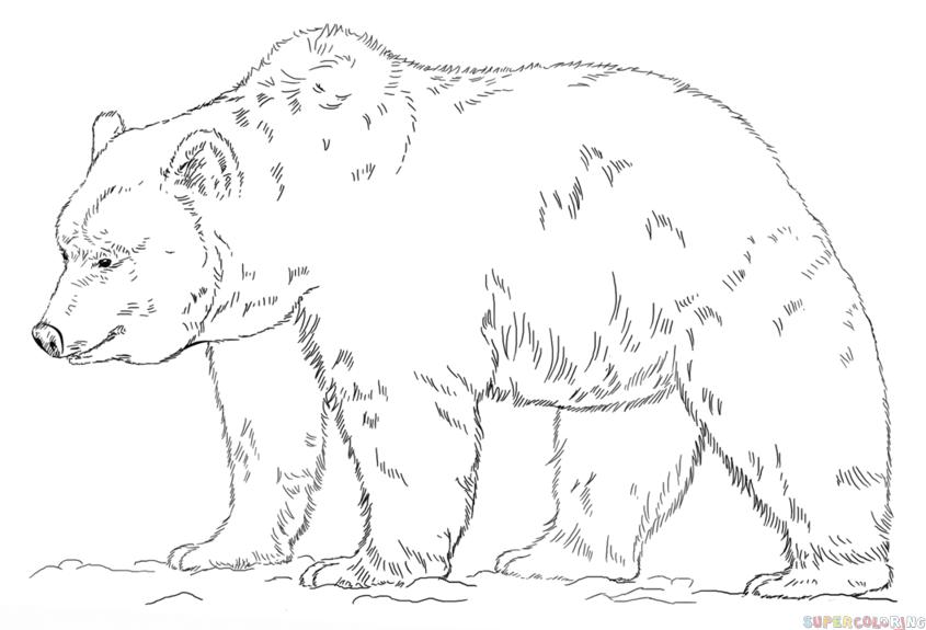 Drawn polar  bear giant Bear to to Step draw