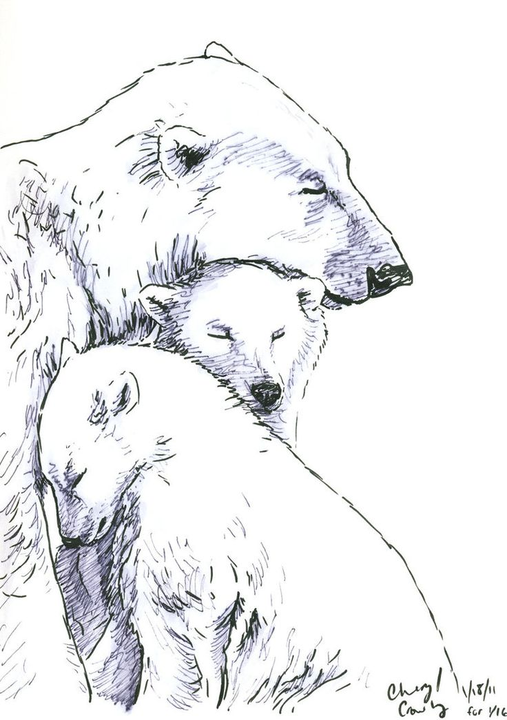 Bear Cub clipart drawn Tattoo Pinterest on Polar silvercrossfox
