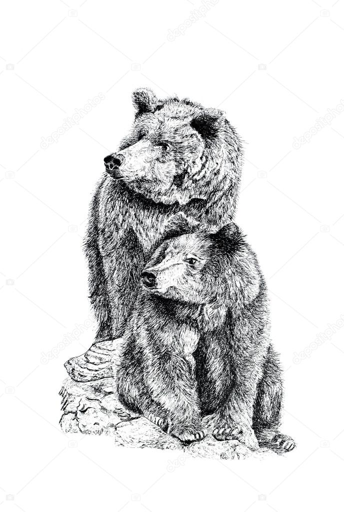 Drawn grizzly bear hand drawn Grizzly #1996802 Stock Stock —