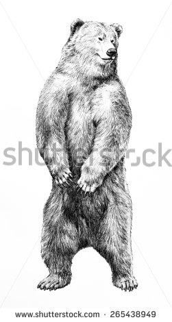 Drawn grizzly bear hand drawn  bear background legs on