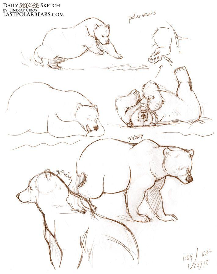 Drawn polar  bear man eater Last Pinterest months bears cubs