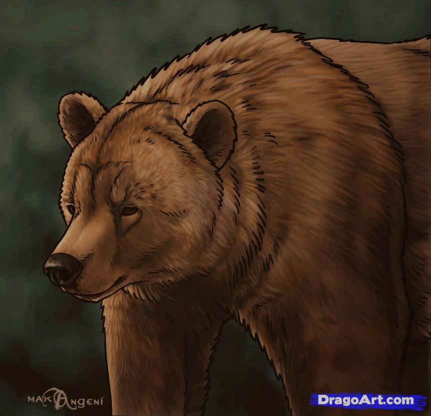 Drawn polar  bear dragoart Grizzly by forest animals Step